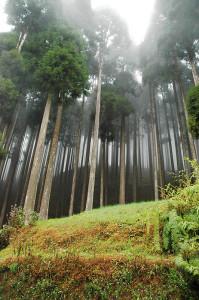 потрясающе красивый лес.