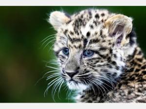 1571670905-suesser-nachwuchs-berliner-leoparden-zwillinge-hS34