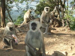 Monkey 2_prv